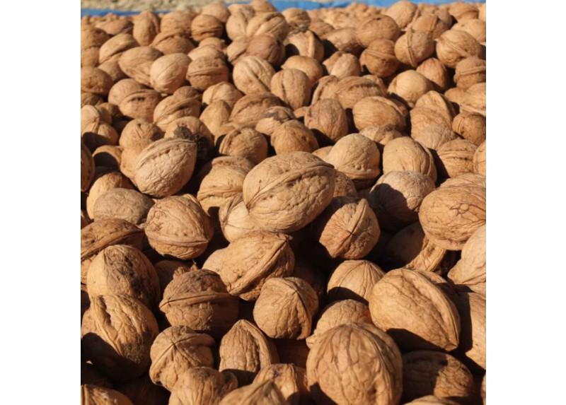 Maras Walnut in Shell